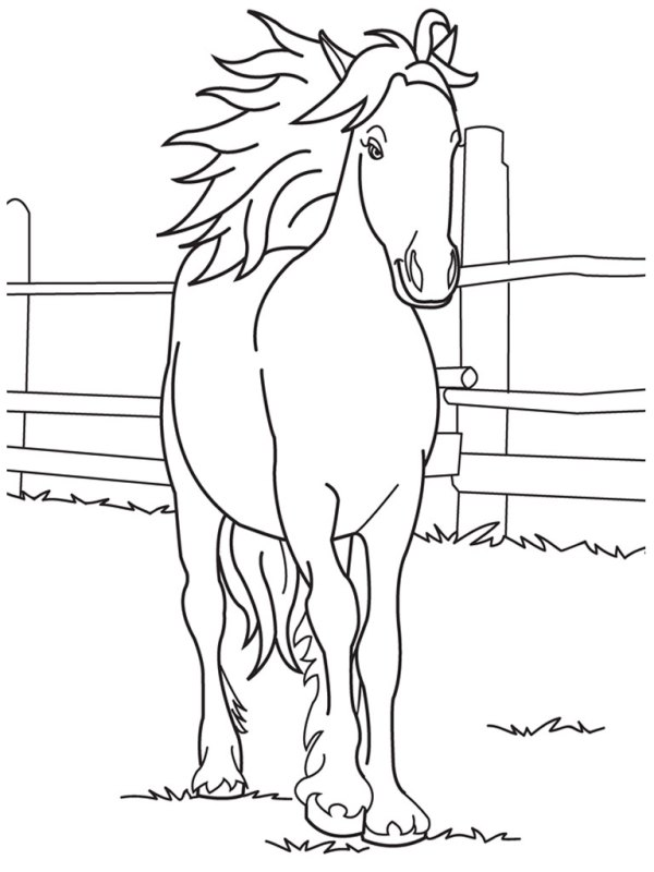 horse head coloring page # 14