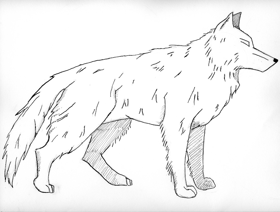 20 Awesome Baby Wolf Coloring Pages Printable