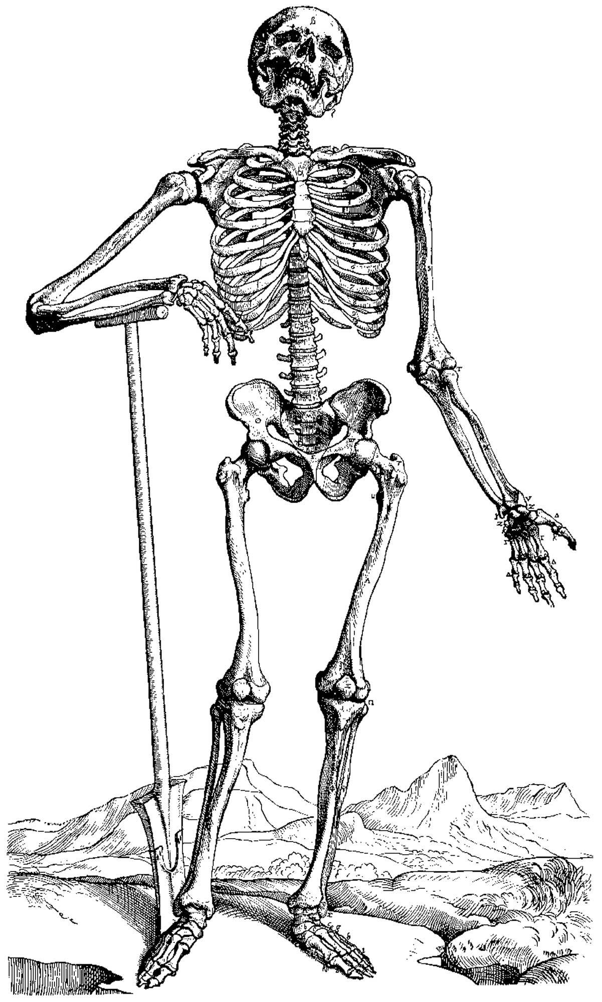 hight resolution of skeleton coloring pages to print