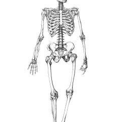 Kids Skeletal System Diagram Ford Taurus Cooling Free Printable Skeleton Coloring Pages For