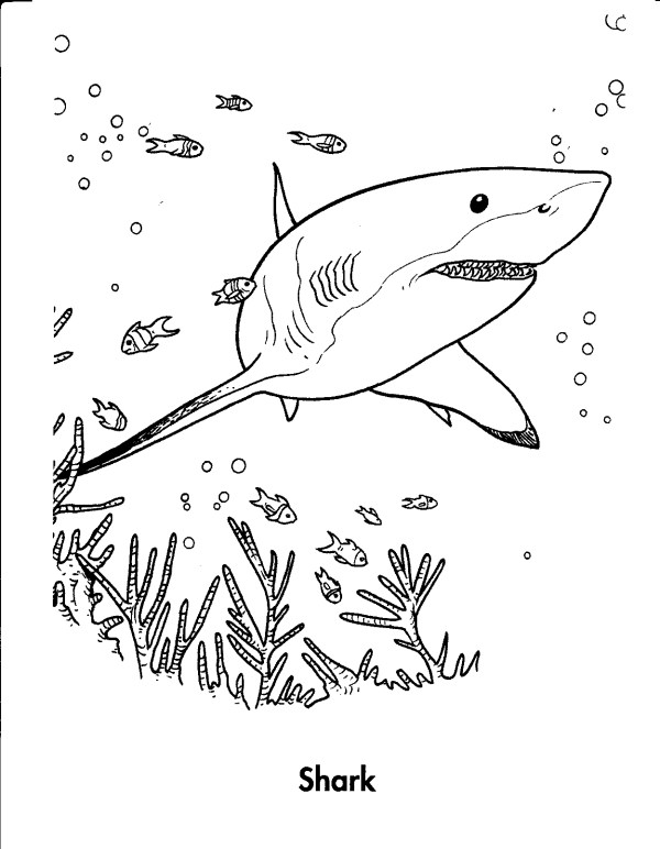 great white shark coloring pages # 10