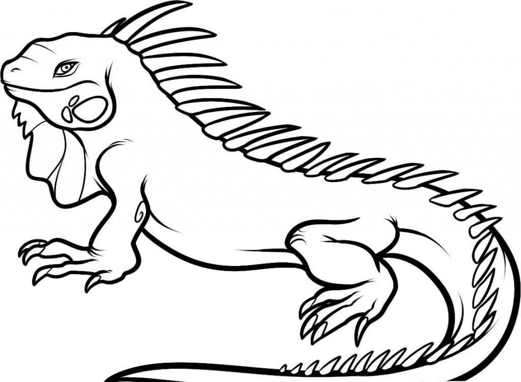 s iguana Colouring Pages
