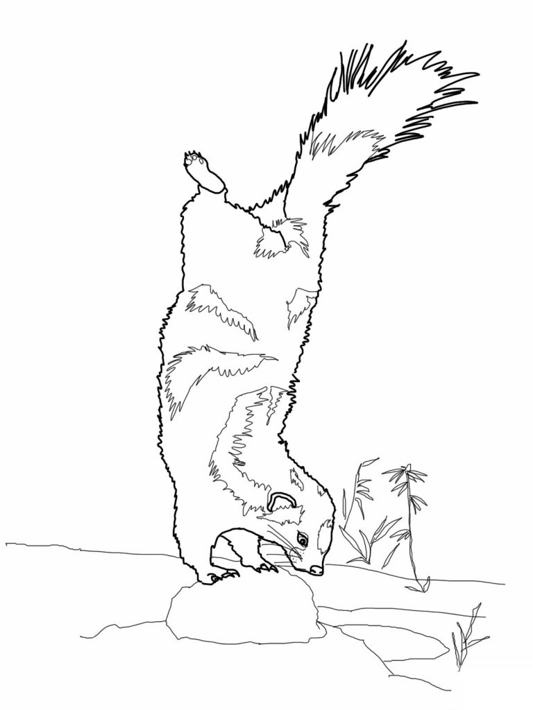 skunk coloring pages