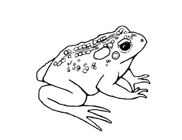 toad coloring pages # 11