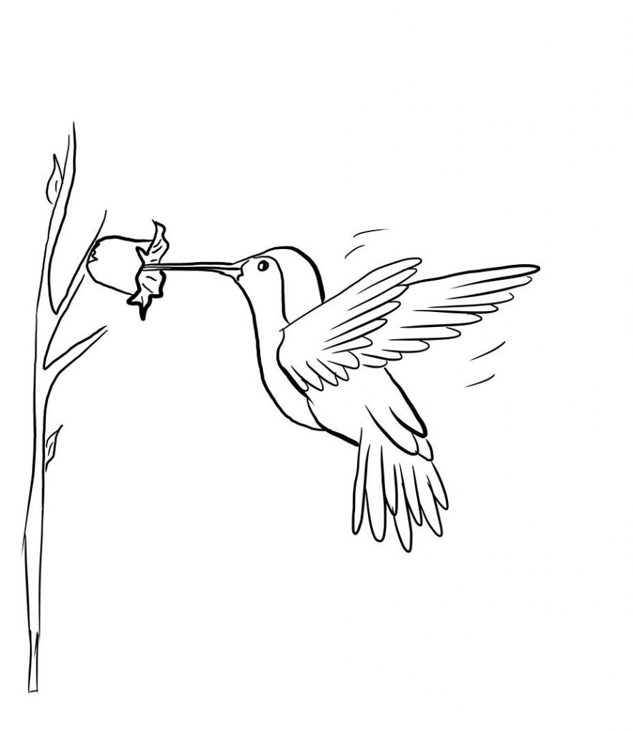 Sketches Of Hummingbirds With Flowers - Auto Electrical ...