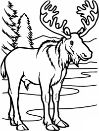 Vbs Vbs 2018 Themes Camp Moose On The Loose Vbs 18