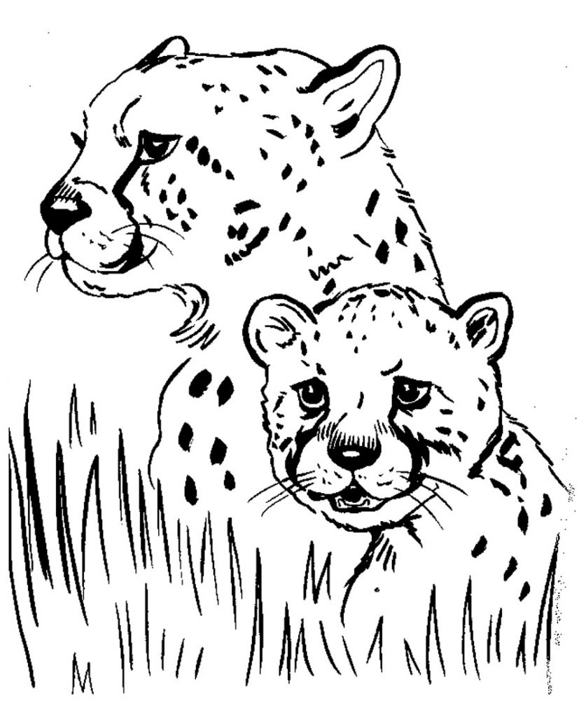 Free Printable Cheetah Coloring Pages For Kids | free printable colouring sheets animals