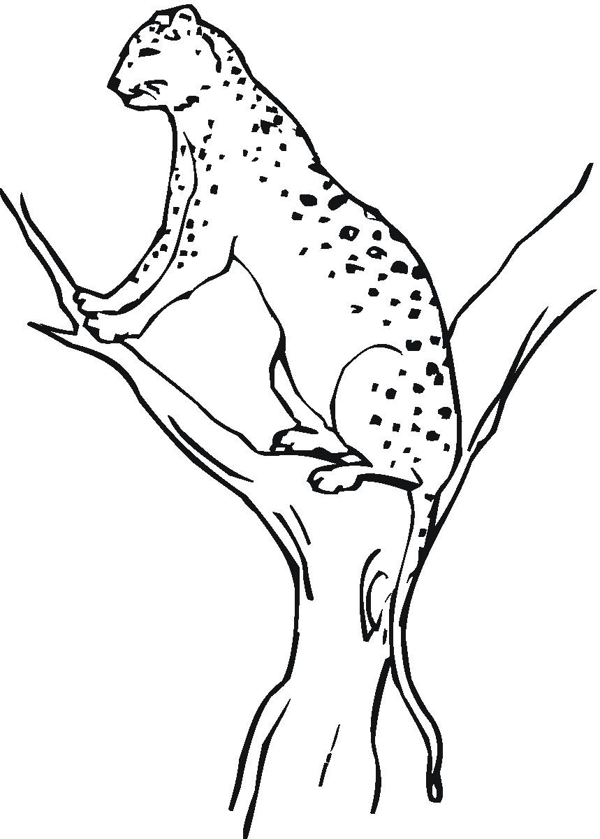 Free Printable Cheetah Coloring Pages For Kids