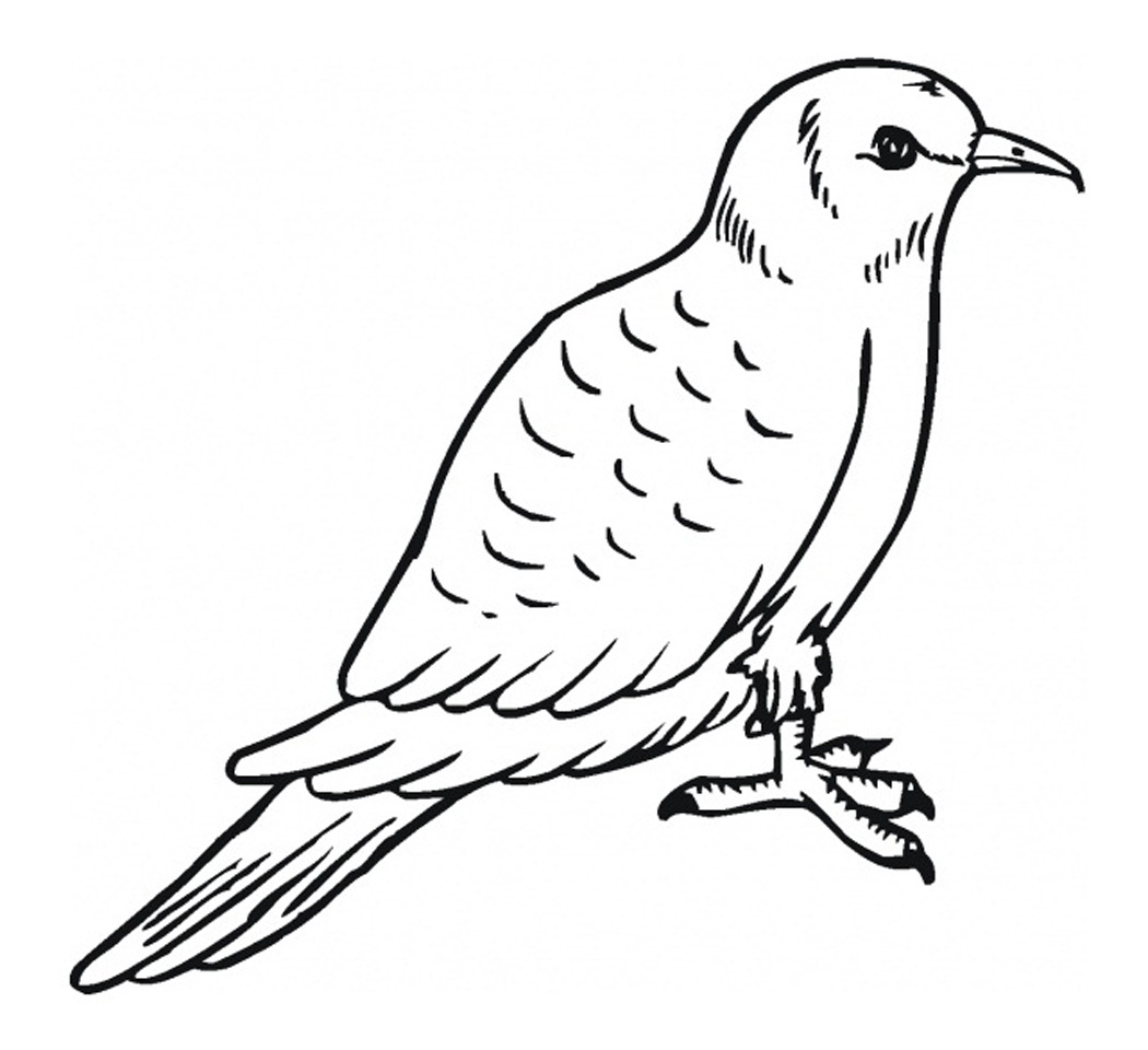 Free Printable Pigeon Coloring Pages For Kids