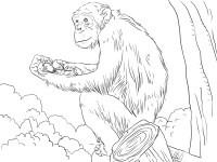 Free Printable Chimpanzee Coloring Pages For Kids