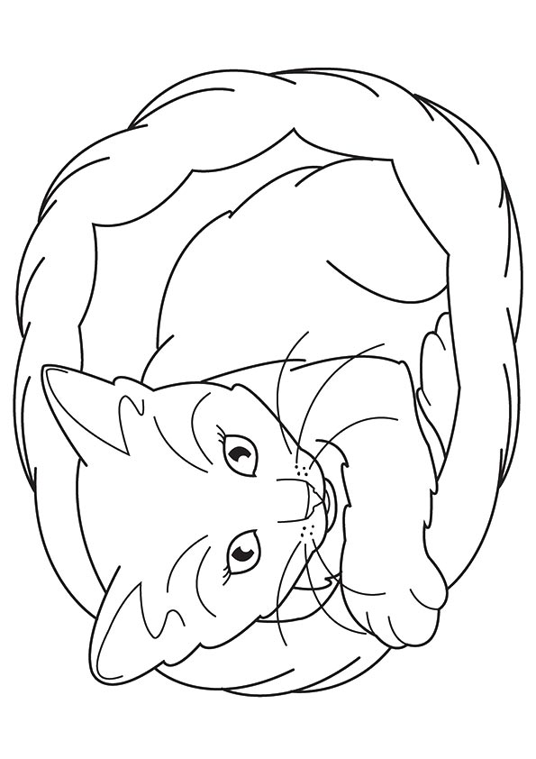 Free Printable Kitten Coloring Pages For Kids Best Coloring Pages For Kids