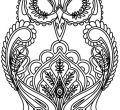 Animal coloring pages for adults best kids wallpaper hd detailed iphone high quality owl