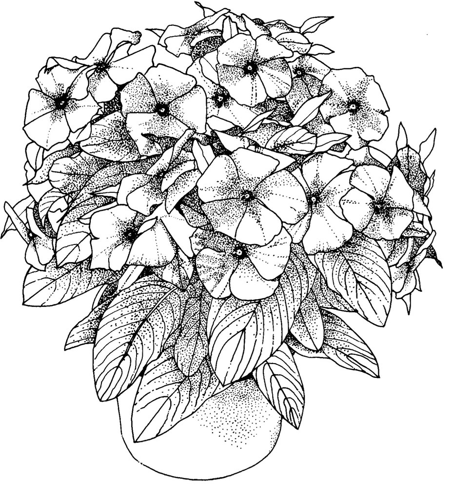 Flower Coloring Pages for Adults - Best Coloring Pages For ... | coloring pictures for adults flowers