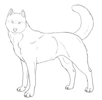 Husky Puppy Drawing To Color Images Sketch Coloring Page