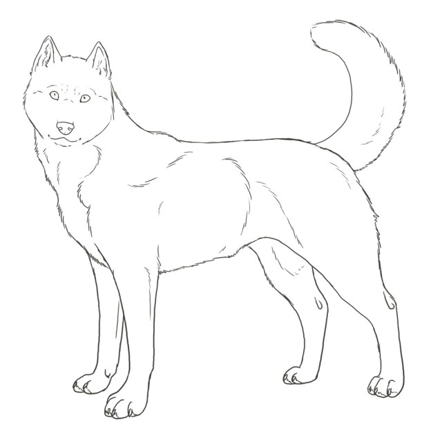 Husky Coloring Pages - Best Coloring Pages For Kids
