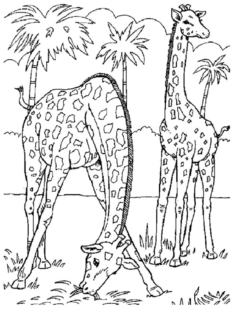 Wild Animal Coloring Pages - Best Coloring Pages For Kids | coloring pages printable animals