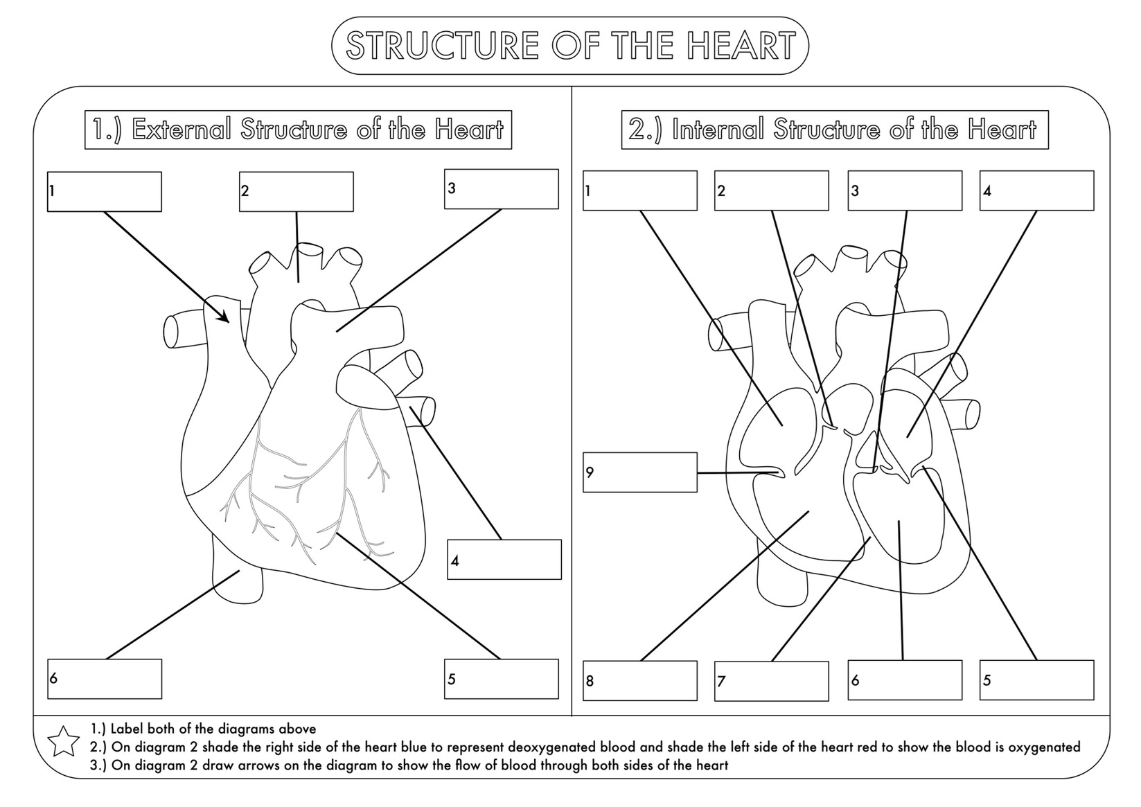 hight resolution of Human Heart Worksheets For Kindergarten   Printable Worksheets and  Activities for Teachers