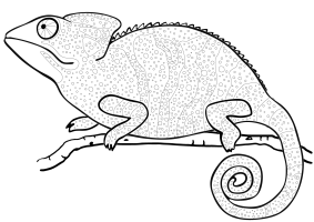 Chameleon Coloring Pages   Best Coloring Pages For Kids