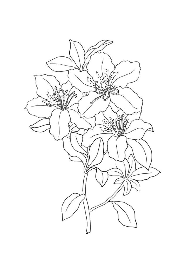 Lily Coloring Pages - Best Coloring Pages For Kids