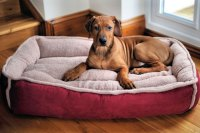 2018 Best Dog Beds Reviews - Top Rated Dog Beds