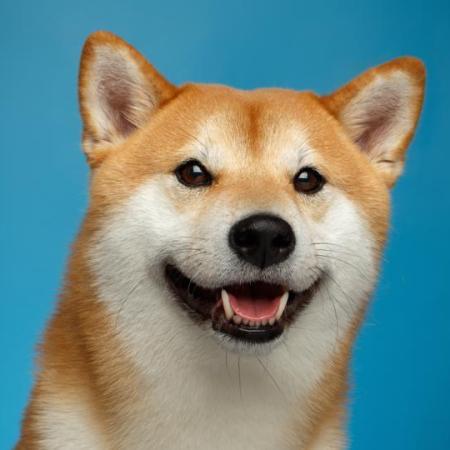 Dogecoin's market capitalisation is now $50 billion