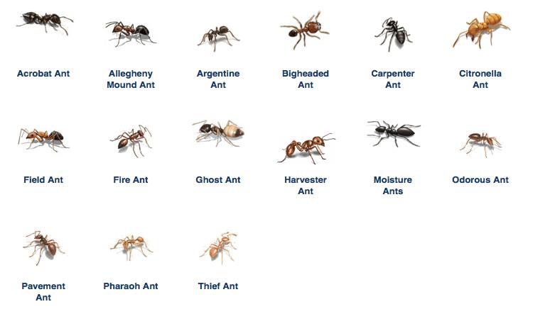 Ant Removal Best Defense Pest Control Hartford Connecticut