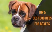 Top 5 Best Dog Beds for Boxers of 2018 | Best Dog Care Tips