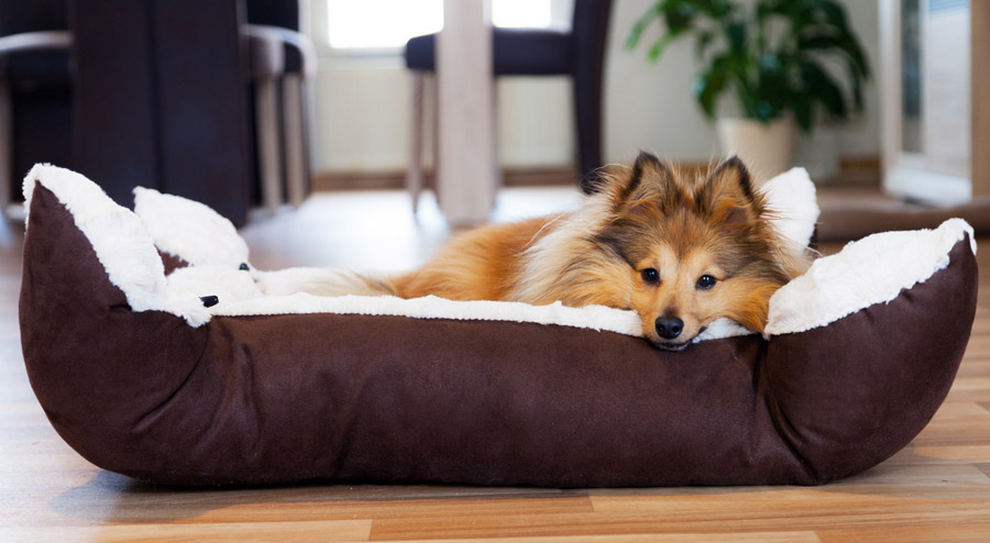 chew proof dog bed top 5 picks for