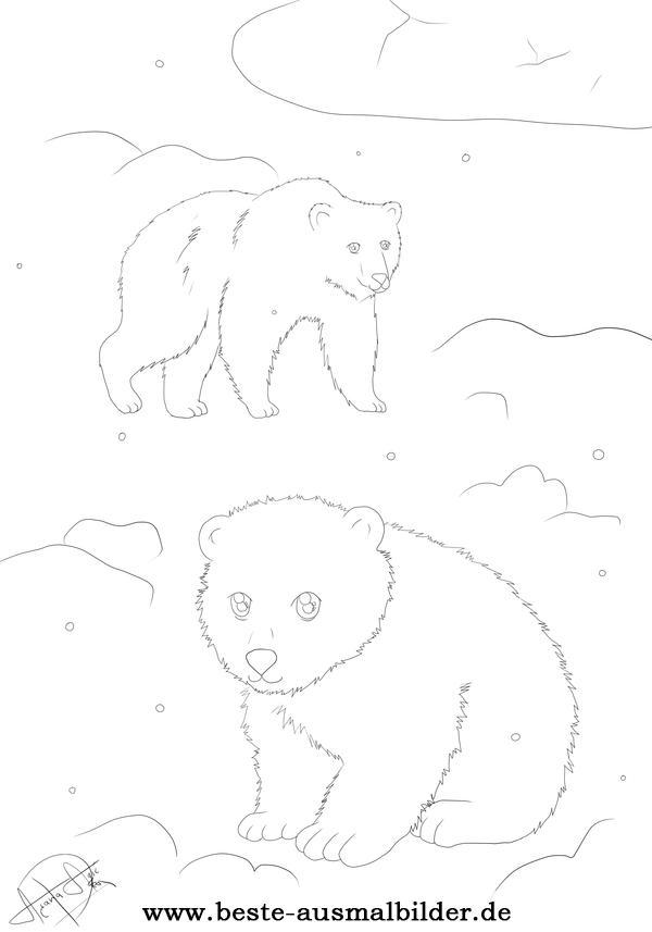 Eisbär Ausmalbilder- Malvorlagen von Polarbären und