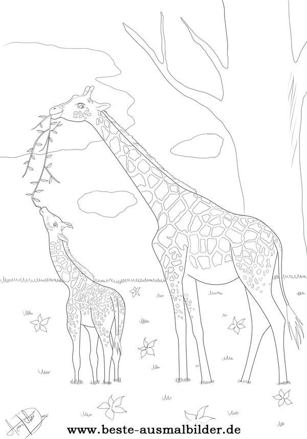 Giraffe Malvorlage Kostenlose Ausmalbilder Von Tieren Fr