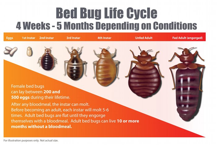 Bed Bug Inspection & Control Company Winchester and Front ...