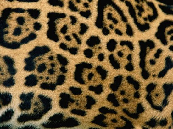 Free Animals Inspired Photoshop Patterns