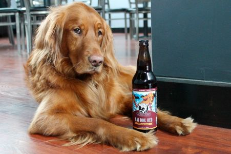 Kai Dog ghostfish brewing taproom gluten free beer tour taproom review