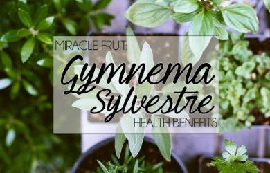 gymnema sylvestre featured