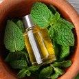 melissa essential oil