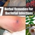 Herbal Remedies to Prevent Bacterial Infections
