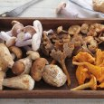 Medicinal Mushrooms Backed by Science
