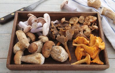 Medicinal Mushrooms Backed by Science