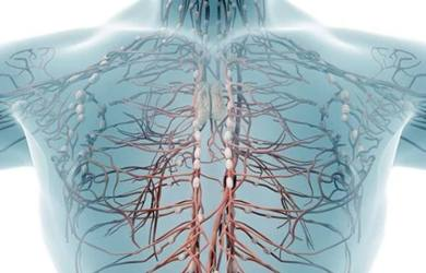 The Main Functions of the Lymphatic System