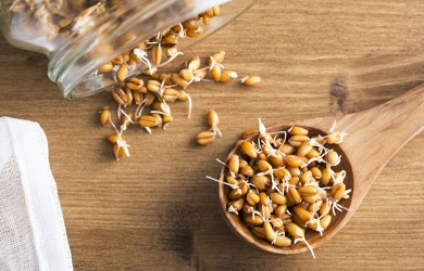 Benefits of Wheat Sprouts