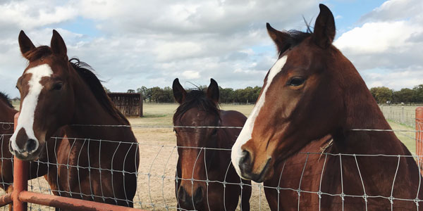 three horses standing behind metal fence on large property