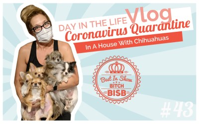 Day in The Life: Corona Quarantine with a House Full of Chihuahuas VLOG