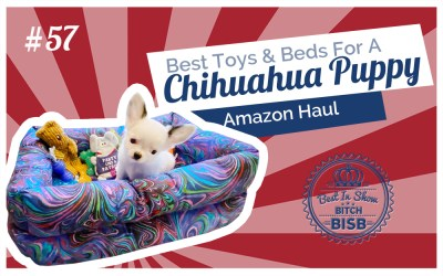 What are the Best Toys, Treats and Beds for Chihuahuas and Small Dogs – Puppy Haul