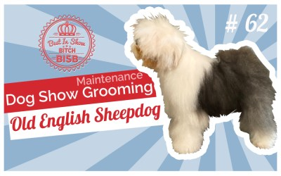 Dog Show Grooming: How to Maintenance Groom an Old English Sheepdog