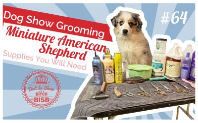 Dog Show Grooming: How To Groom a Miniature American Shepherd and the Supplies You Need