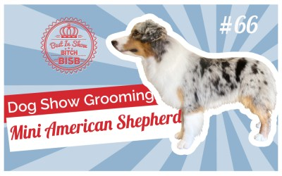 Dog Show Grooming: How To Groom a Miniature American Shepherd