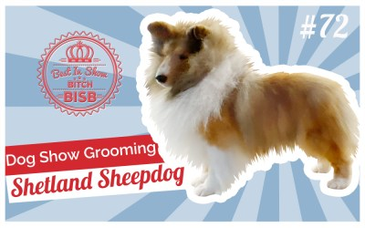Dog Show Grooming: How to Groom a Shetland Sheepdog