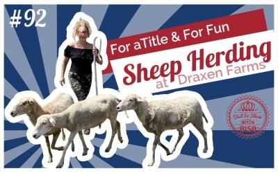 All Breed Sheep Herding at Draxen Farms