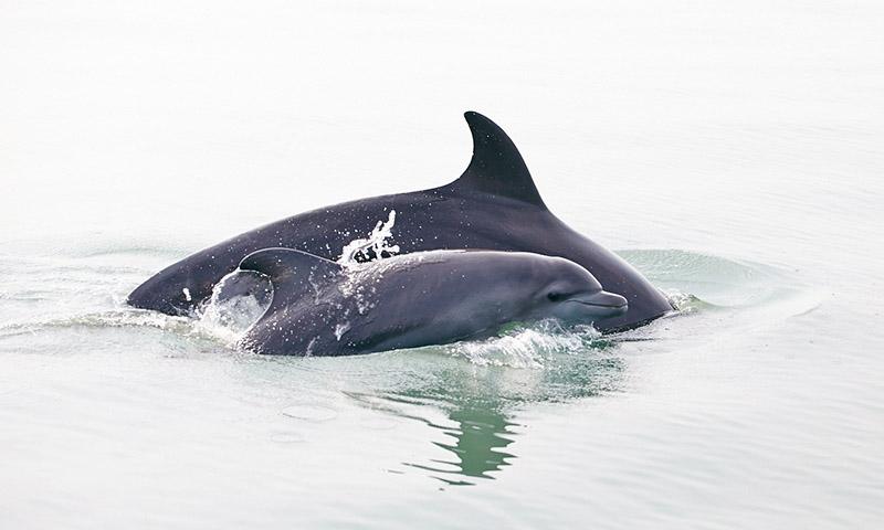 dauphins en liberte puerto vallarta