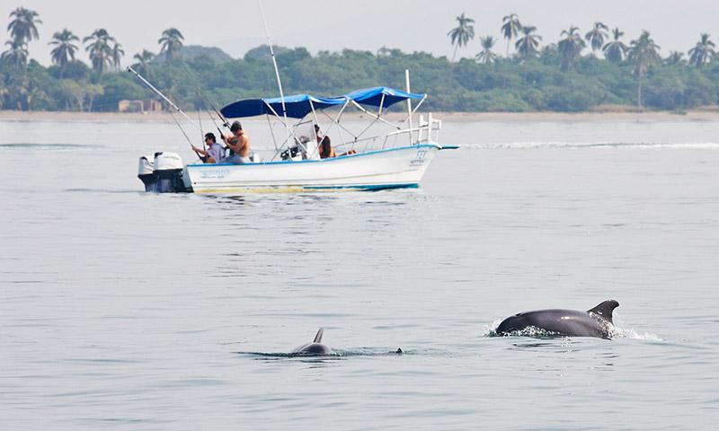 ou voir les dauphins au mexique